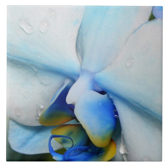 Drops on Blue Orchid tile
