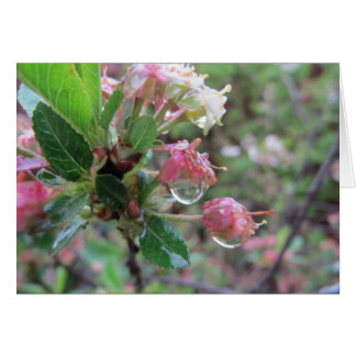 Drops on Cherry Buds Card