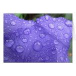 Drops on Purple Iris Card
