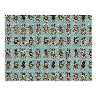 Drosophila mutants postcard