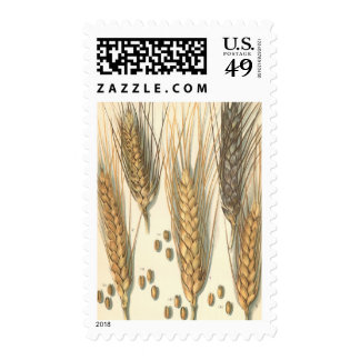 Drought Resistant Wheat Plant, Vintage Agriculture Postage