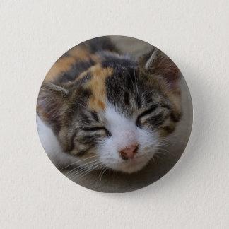 Drowsing Calico Kitten Pinback Button