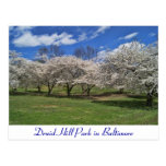 Druid Hill Park in the Spring Postcard