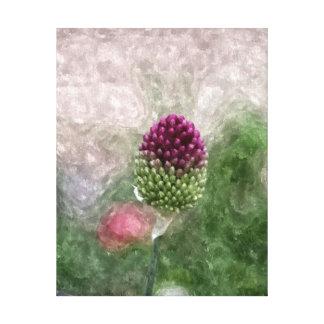 Drumstick Allium Canvas