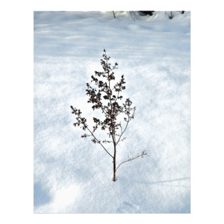 "Dry branches tree sticking out of the snow 8.5"" x 11"" flyer"