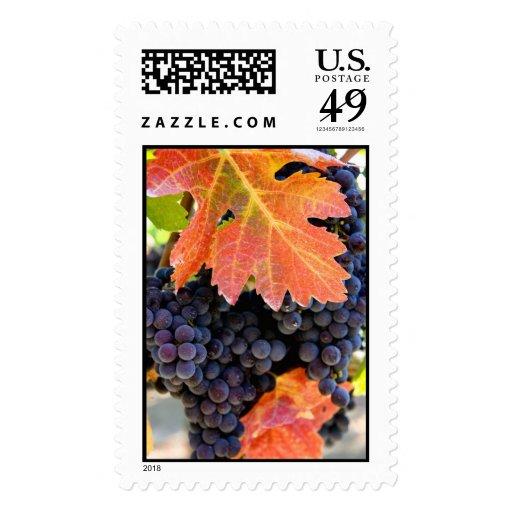 Dry Creek Rafanelli Stamps