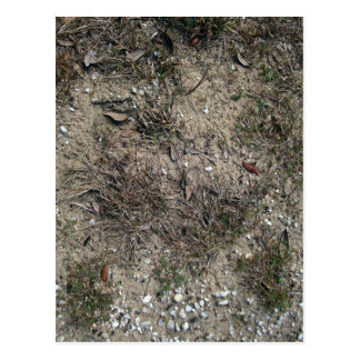 Dry Grass And Stony Ground Close Up Postcard