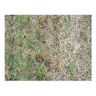 Dry Grass Background Texture Postcard