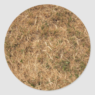 Dry grass in a meadow classic round sticker