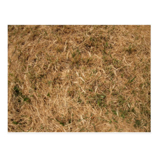 Dry grass in a meadow postcard