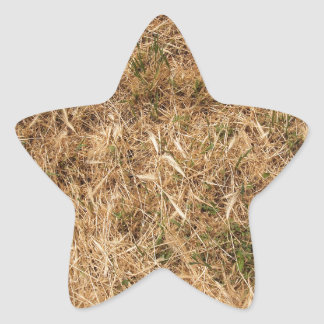 Dry grass in a meadow star sticker