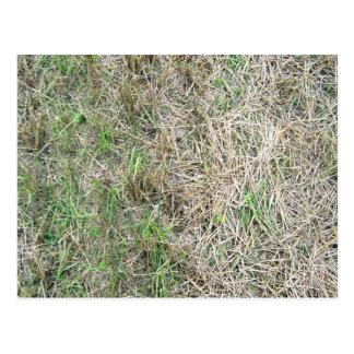 Dry Grass Seamless Texture Postcard