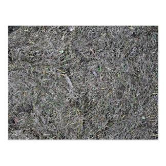 Dry Grass Texture Postcard