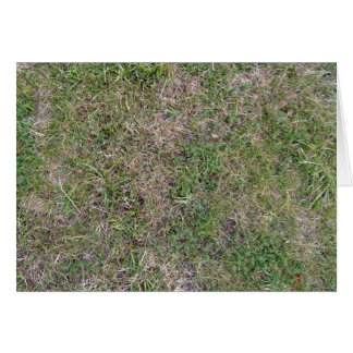 Dry Green Grass Ground Background Textures Greeting Card