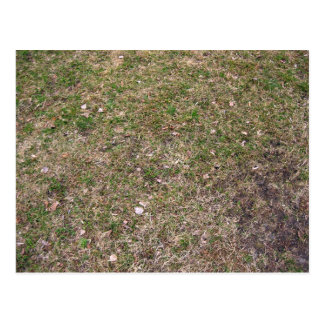 Dry Green Grass Ground Textures Postcard