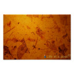 dry leaves background poster