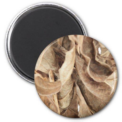 Dry Leaves Magnet