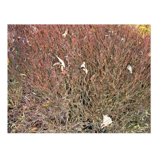 Dry Leaves on Dry Grass Field Postcard