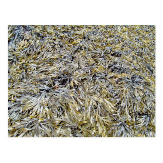 Dry Leaves Texture Post Card