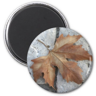 Dry maple leaf 2 inch round magnet
