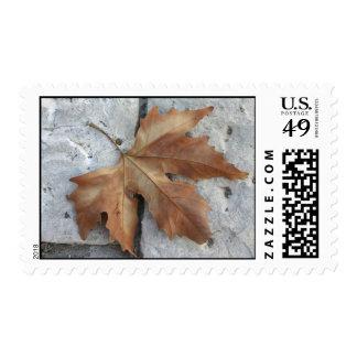 Dry maple leaf on pavement postage