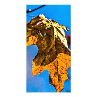 Dry oak leaf - Spring is nor far off Card