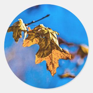 Dry oak leaf - Spring is nor far off Classic Round Sticker