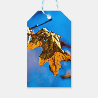 Dry oak leaf - Spring is nor far off Gift Tags