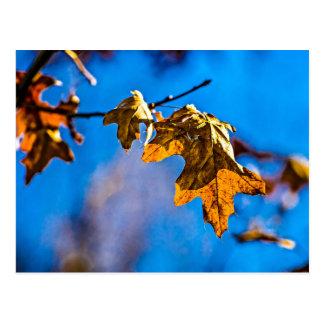 Dry oak leaf - Spring is nor far off Postcard