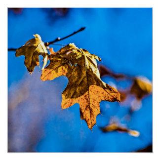 Dry oak leaf - Spring is nor far off Poster