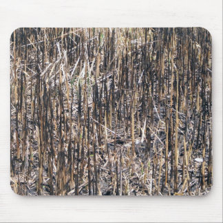 Dry Reeds Field Mouse Pad
