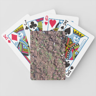 Dry Soil and Grass Blooming Bicycle Playing Cards