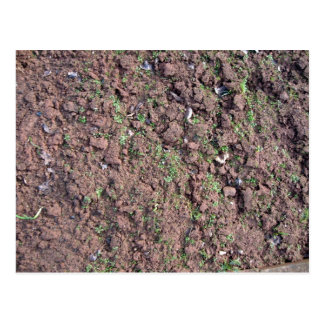 Dry Soil and Grass Blooming Postcard