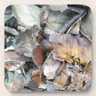 Dry Tilia Leaves Beverage Coaster