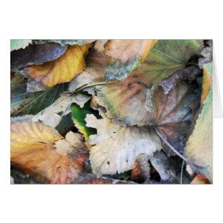 Dry Tilia Leaves Card
