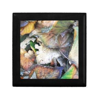Dry Tilia Leaves Keepsake Box