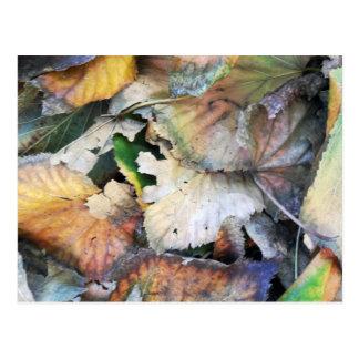 Dry Tilia Leaves Postcard