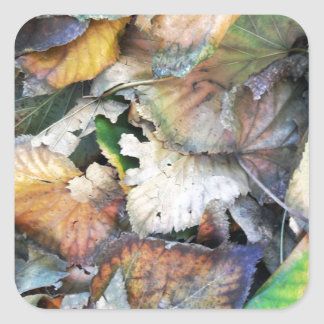 Dry Tilia Leaves Square Sticker