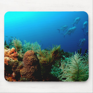 Dry Tortugas National Park, Coral Reef, Florida Mouse Pad