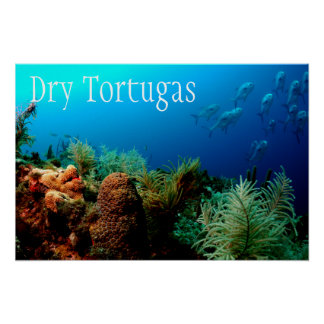 Dry Tortugas National Park, Coral Reef Poster