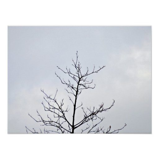 Dry tree branch against cloudy sky poster