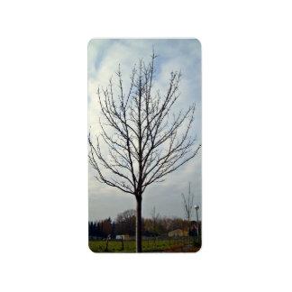 Dry Tree in Garden Label
