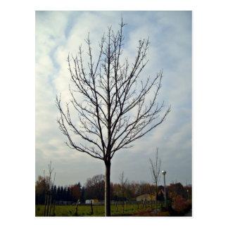 Dry Tree in Garden Postcard