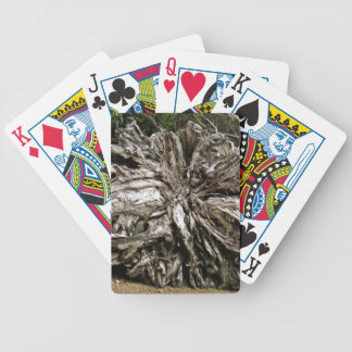 Dry tree roots in beach bicycle playing cards