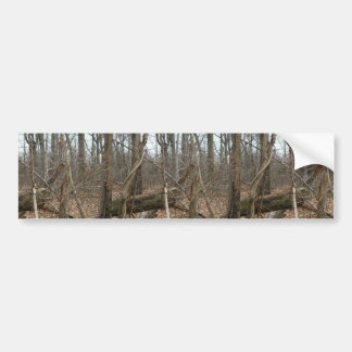 Dry Trees In Forrest With Fallen Leaves Car Bumper Sticker