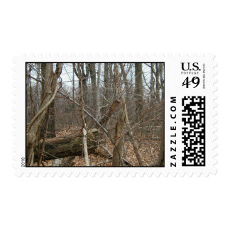 Dry Trees In Forrest With Fallen Leaves Stamp