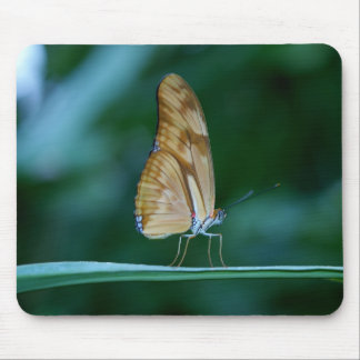 Dryas iulia butterfly mousepads