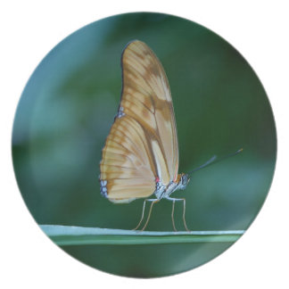 Dryas iulia butterfly plate