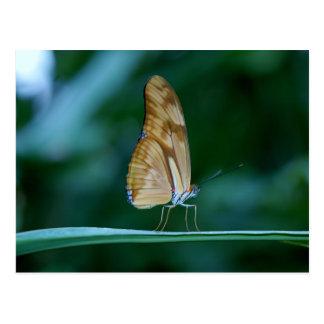 Dryas iulia butterfly postcard