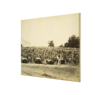 Drying leather, Argentina (albumen print on card)